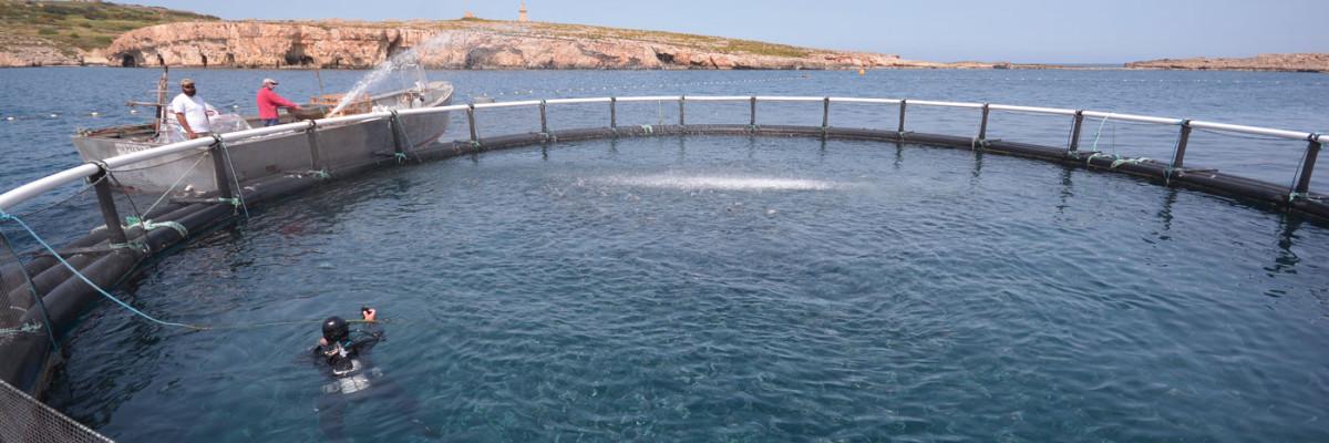 P2M Aquaculture